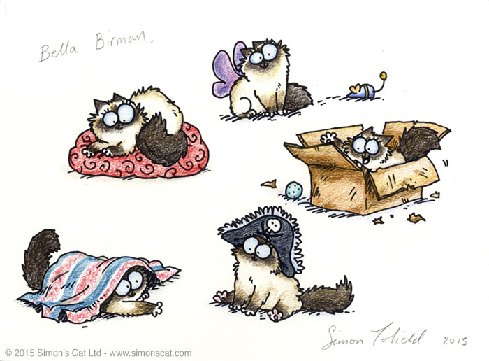 Simon's Cat Indiegogo Perk - Bella Birman