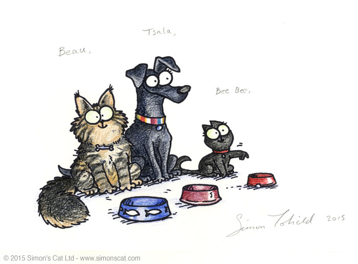 Simon's Cat Your Pet Drawn Pictures - Beau, Tsala and Bee Bee