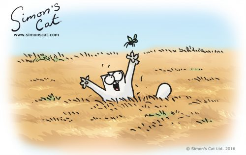 Simon's Cat - Field Day