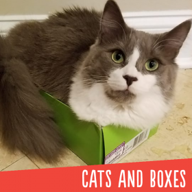 Cats And Boxes Gallery Thumbnail