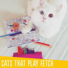 Cats That Play Fetch Simon's Cat Snaps