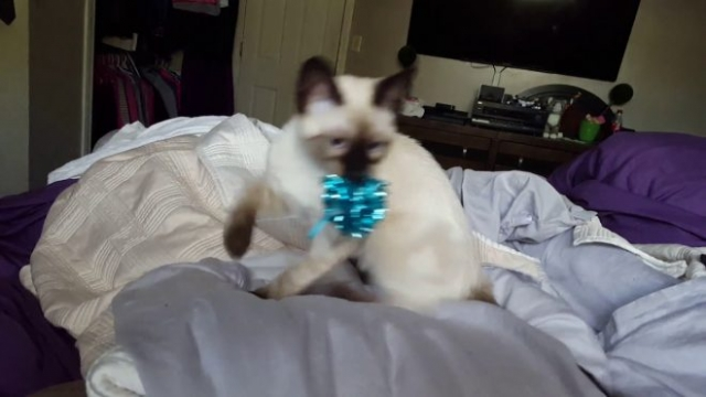 Fox likes to play fetch Simon's Cat Snaps