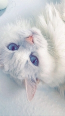 Ayla, Simon's Cat Snap submitted by Ada V.