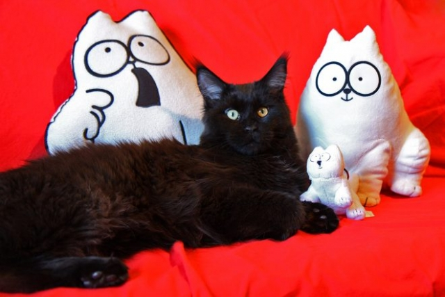 Simon's Cat Snaps - Black Cat